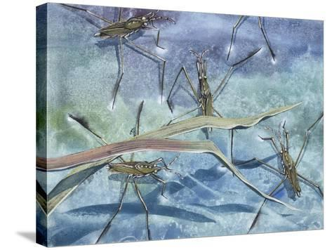 Insects--Stretched Canvas Print