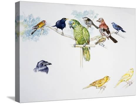 Birds--Stretched Canvas Print