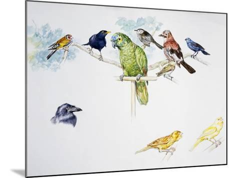 Birds--Mounted Giclee Print