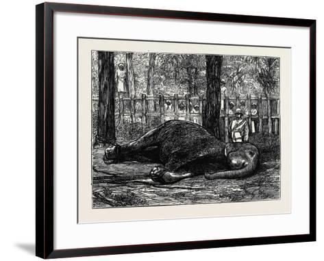 Elephant Hunting in Ceylon: Cow Elephant Secured in Corral--Framed Art Print