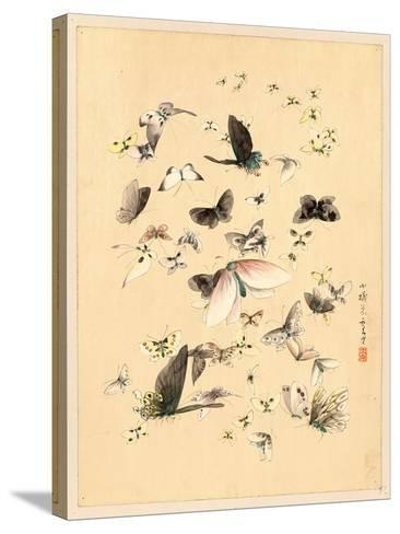 Butterflies and Moths, Between 1800 and 1850--Stretched Canvas Print