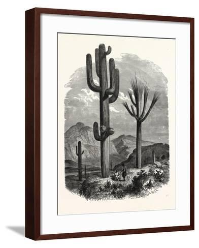 The Cereus Giganteus, or Monumental Cactus--Framed Art Print