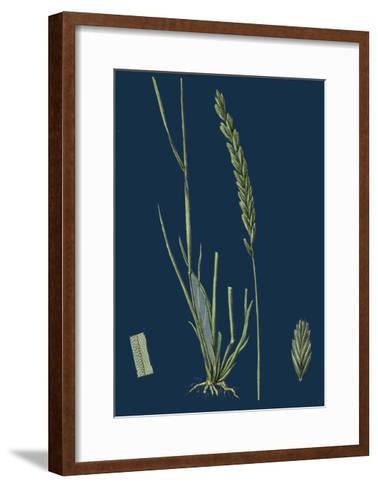 Saxifraga Tridactylites; Rue-Leaved Saxifrage--Framed Art Print