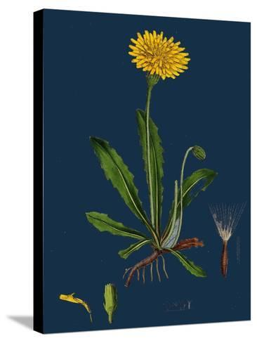 Chenopodium Ficifolium; Fig-Leaved Goosefoot--Stretched Canvas Print