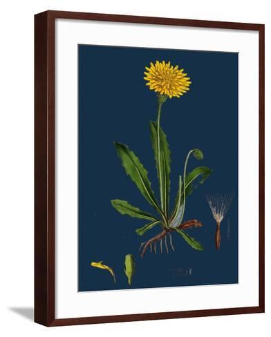 Chenopodium Ficifolium; Fig-Leaved Goosefoot--Framed Art Print