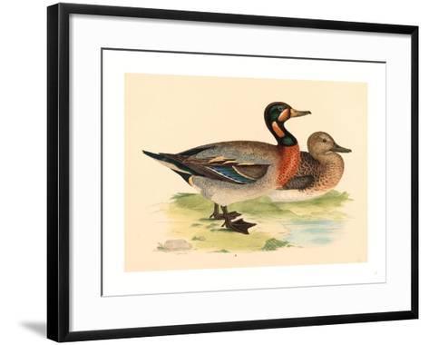 British 19th Century, Bimaculated Duck, 1855--Framed Art Print