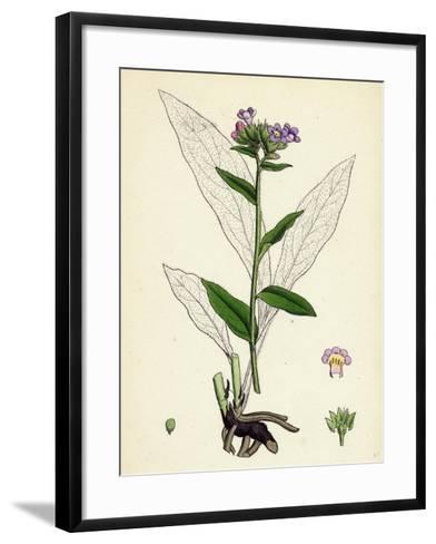 Pulmonaria Angustifolia Narrow-Leaved Lungwort--Framed Art Print