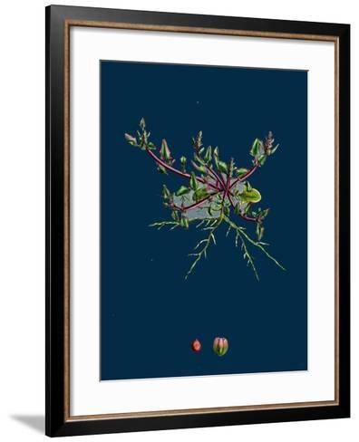 Mulgedium Alpinum; Blue Sow-Thistle--Framed Art Print