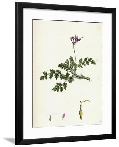 Erodium Cicutarium Common Stork'S-Bill--Framed Art Print