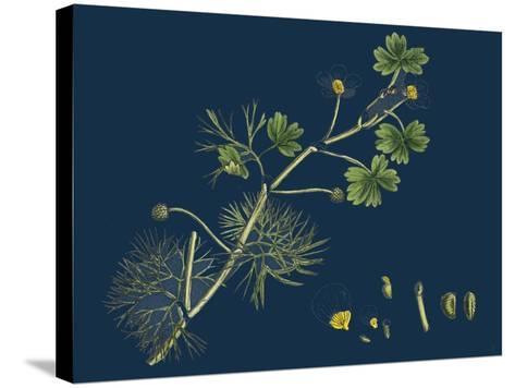 Rhamnus Frangula; Berry-Bearing Alder--Stretched Canvas Print