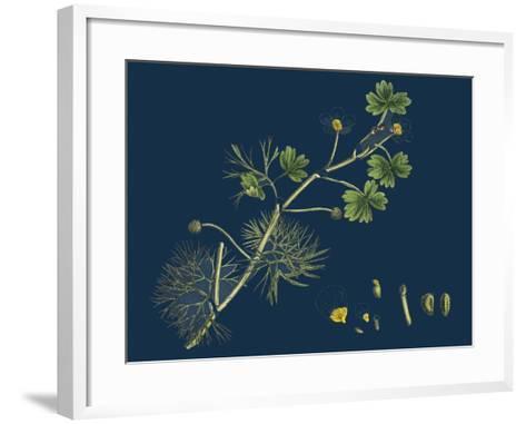 Rhamnus Frangula; Berry-Bearing Alder--Framed Art Print