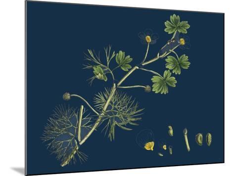 Rhamnus Frangula; Berry-Bearing Alder--Mounted Giclee Print