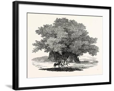 Great Chesnut Tree of Mount Aetna--Framed Art Print