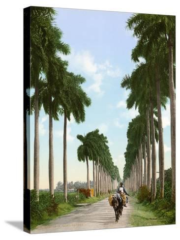 Avenue of Palms, Havana, 1903--Stretched Canvas Print