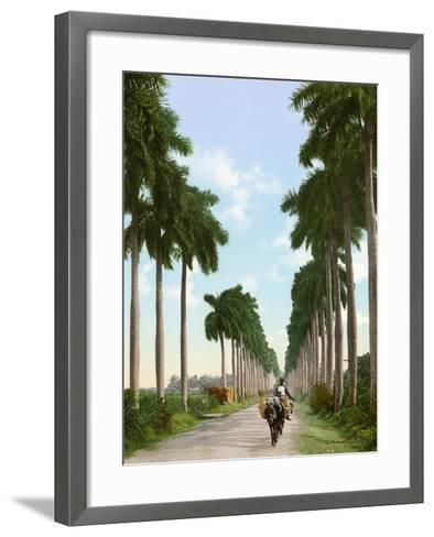Avenue of Palms, Havana, 1903--Framed Art Print