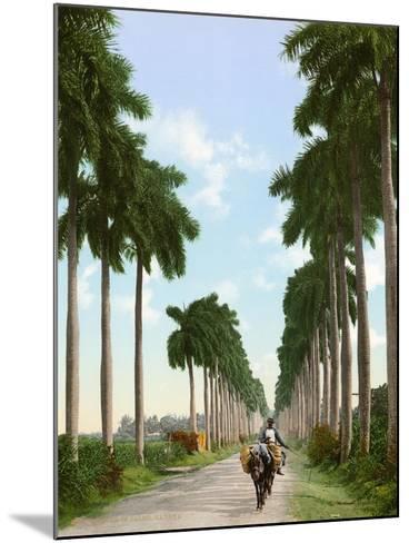 Avenue of Palms, Havana, 1903--Mounted Giclee Print