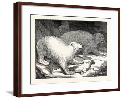 Polar Bears and Seal--Framed Art Print