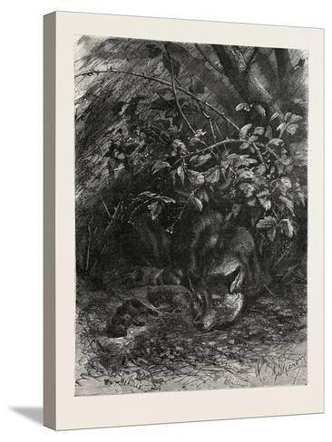 The Wolf in its Lair, 1882--Stretched Canvas Print