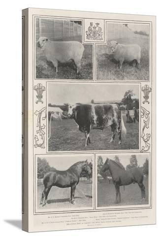The Cattle Show at Cardiff, the Royal Prize Winner and Others--Stretched Canvas Print