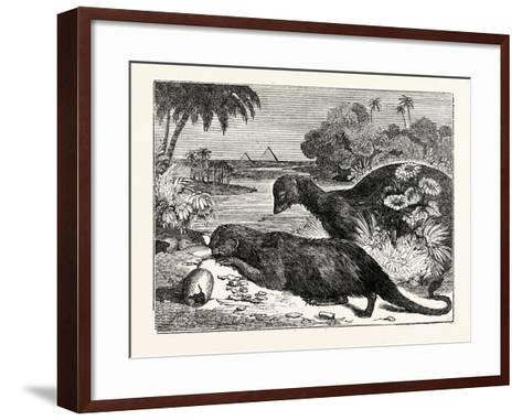Ichneumons--Framed Art Print