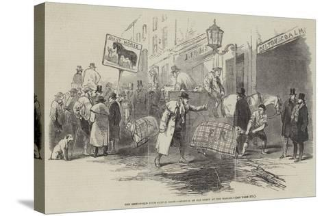 The Smithfield Club Cattle Show, Arrival of Fat Sheep at the Bazaar--Stretched Canvas Print