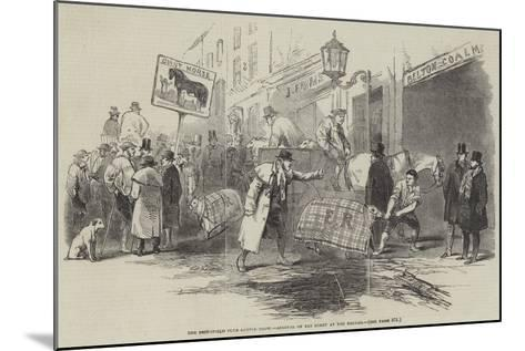 The Smithfield Club Cattle Show, Arrival of Fat Sheep at the Bazaar--Mounted Giclee Print