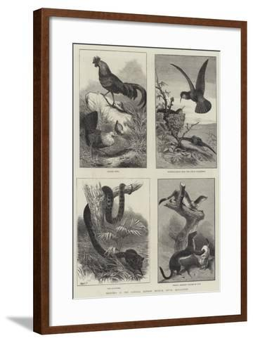 Sketches in the Natural History Museum, South Kensington--Framed Art Print