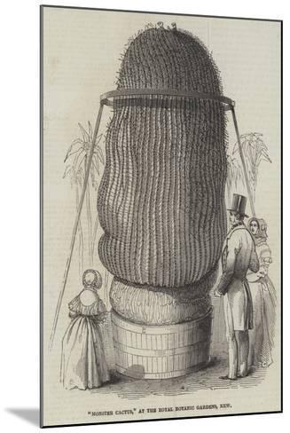 Monster Cactus, at the Royal Botanic Gardens, Kew--Mounted Giclee Print