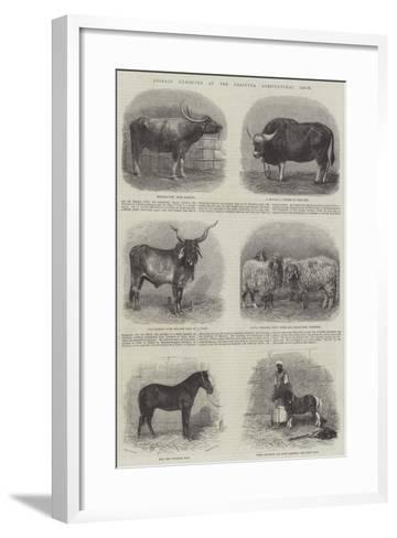 Animals Exhibited at the Calcutta Agricultural Show--Framed Art Print