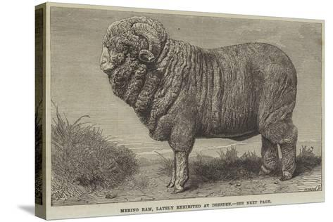Merino Ram, Lately Exhibited at Dresden--Stretched Canvas Print