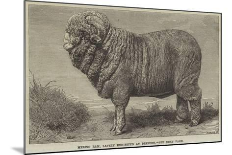 Merino Ram, Lately Exhibited at Dresden--Mounted Giclee Print