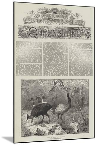 Colonial and Indian Exhibition, Queensland--Mounted Giclee Print