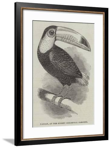 Toucan, at the Surrey Zoological Gardens--Framed Art Print