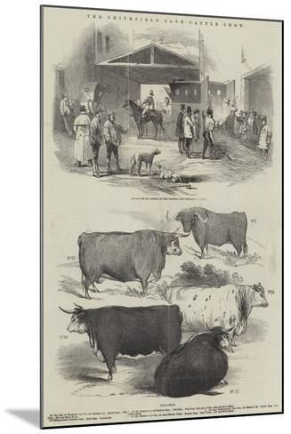 The Smithfield Club Cattle Show--Mounted Giclee Print