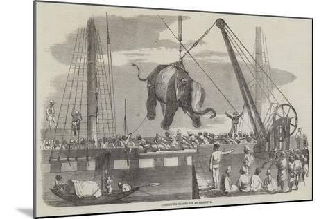 Unshipping Elephants at Calcutta--Mounted Giclee Print