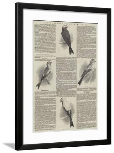 Annual Shows of the Canary Fancy--Framed Art Print