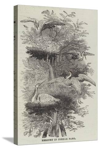 Heronry at Cobham Park--Stretched Canvas Print