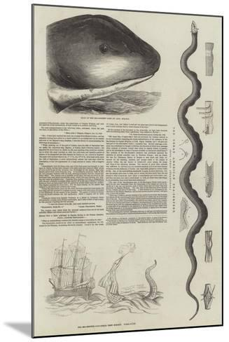 The Great Sea-Serpent--Mounted Giclee Print