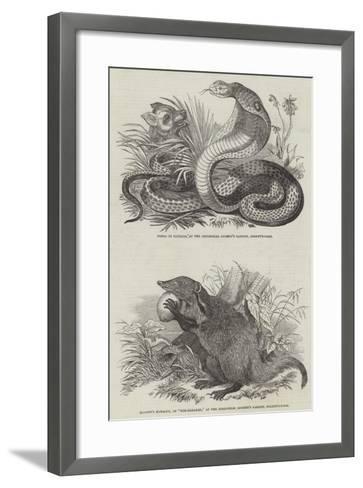 Animals at London Zoo--Framed Art Print