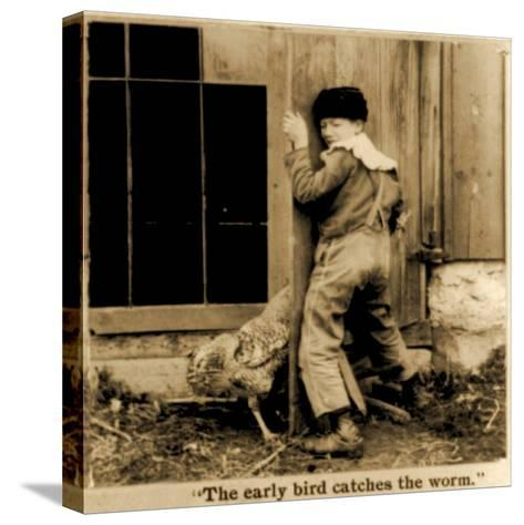Detail of The Early Bird Catches the Worm Stereoscopic Card C.1900--Stretched Canvas Print