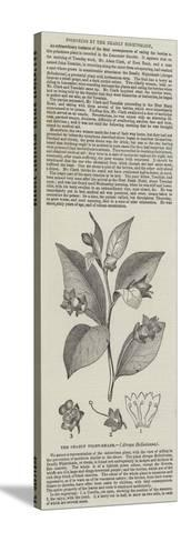 The Deadly Night-Shade, (Atropa Belladonna)--Stretched Canvas Print