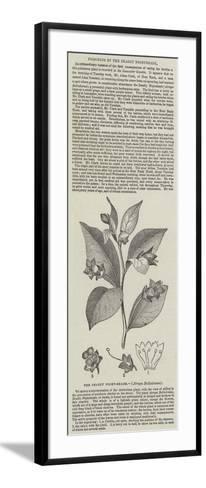 The Deadly Night-Shade, (Atropa Belladonna)--Framed Art Print