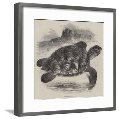The Hawksbill Turtle (Chelonia Imbricata)--Framed Art Print
