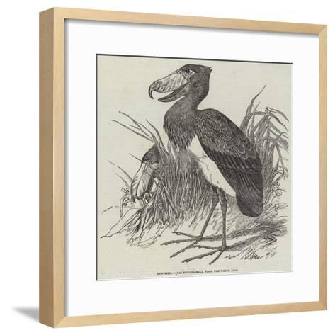 New Bird, (Balaeniceps Rex), from the White Nile--Framed Art Print