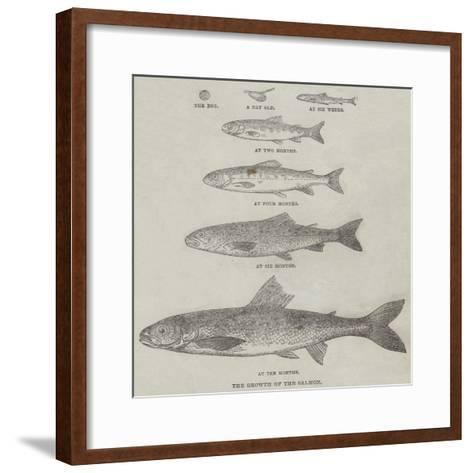 The Growth of the Salmon--Framed Art Print