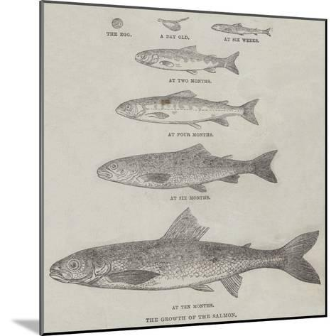The Growth of the Salmon--Mounted Giclee Print