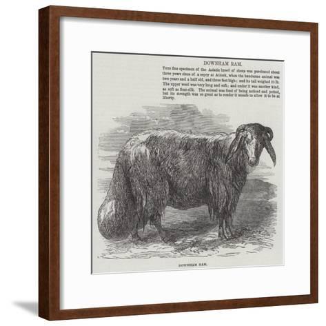 Downham Ram--Framed Art Print