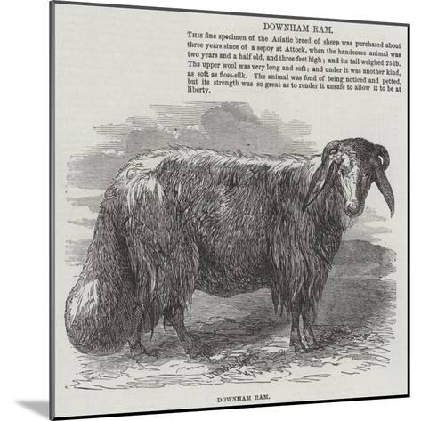 Downham Ram--Mounted Giclee Print