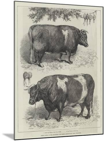 Prize Cattle at the Smithfield Club Show, Agricultural Hall, Islington--Mounted Giclee Print