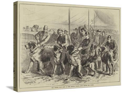 The Kennel Club Show at the Crystal Palace, Going before the Judges--Stretched Canvas Print